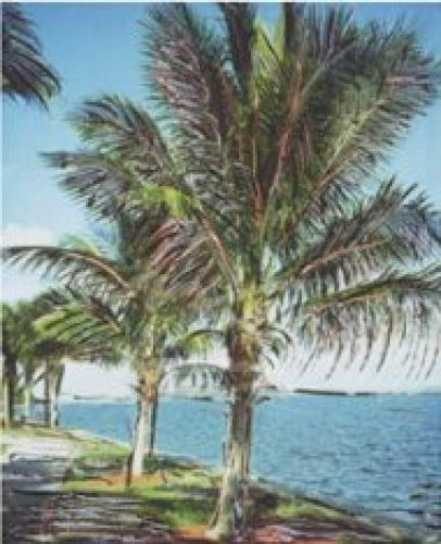 Palm Grove by Leslie Mueller