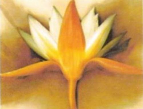Orange Lotus by Cameron