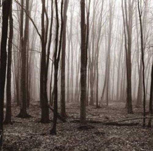 Winter Woods by Erin Clark
