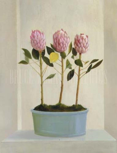 Protea Stand by Mary Hunt