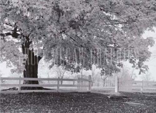 Autumn Morning by Douglas K. Morris