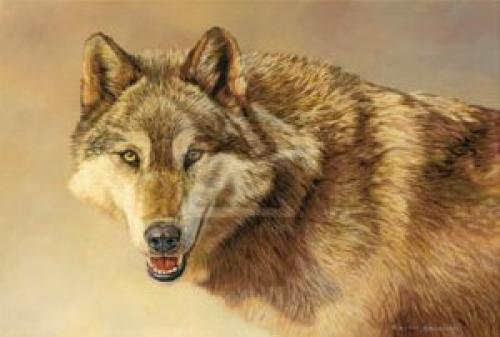 Wolf Portrait by Kalon Baughan