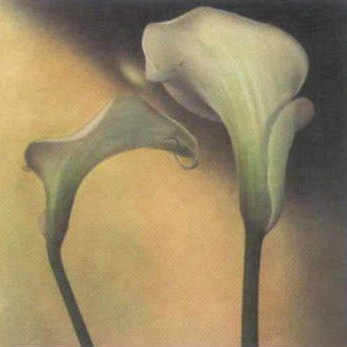 Calla Lily III by Carnochan
