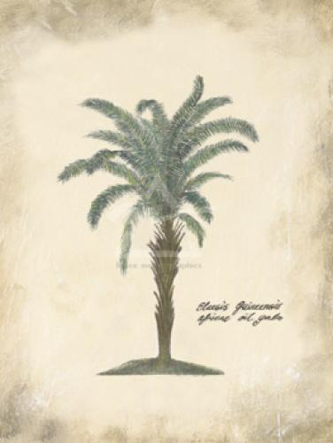 African Oil Palm by Annabel Hewitt