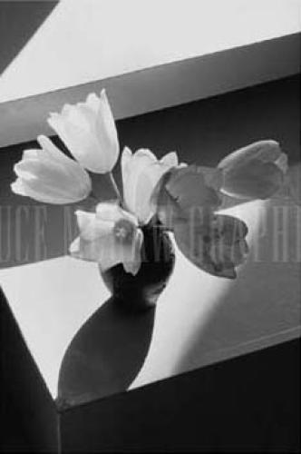 Short Tulips by Lilo Raymond