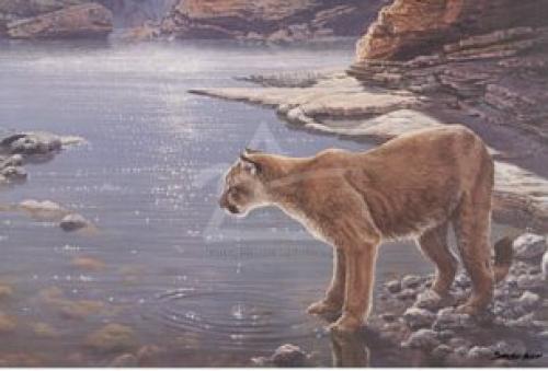 Canyon Creek- Cougar (detail) by John Seerey-Lester