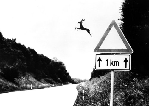 Deer leaping off road sign by Heinz Krimmer