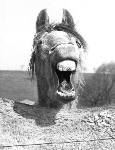 Whinnying horse by Walter Sittig