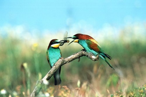 Birds share an insect by Wolfram Martin