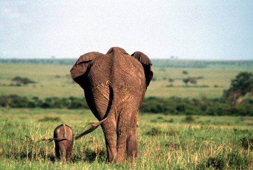 Mother and calf by Koch & Wolf