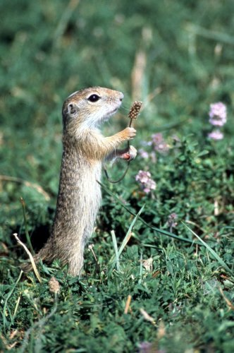 Curious weasel by Regina Usher