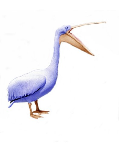 Pelican with open beak by John Drysdale