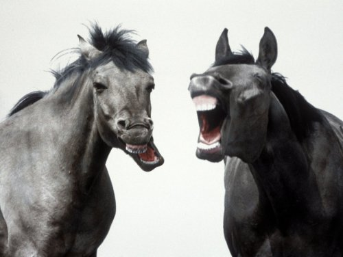 Laughing horses by Walter Sittig