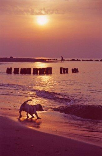 Dog on a beach III by Heinz Krimmer