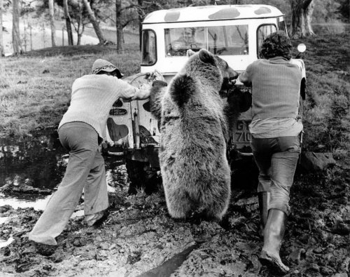 Men and bear push a car by John Drysdale