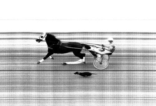 Dog on the racetrack by Birgit & Axel Kramer-Koschies