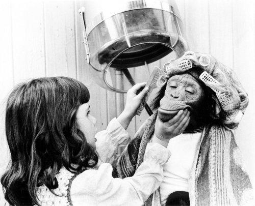 Girl beautifying a chimp by John Drysdale