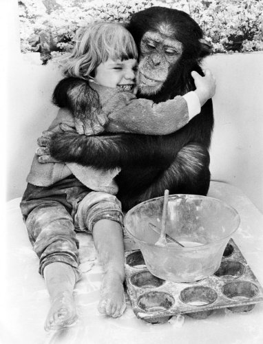 Chimp and girl hugging by John Drysdale