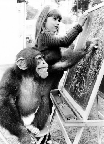 Girl and chimp by John Drysdale