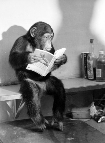 Chimp reading on a bench by Heinrich Von Der Becke