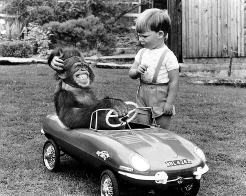 Chimp and boy with a toy car by John Drysdale