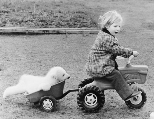 Girl towing a baby polar bear by John Drysdale