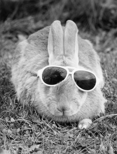 Rabbit with glasses by Walter Sittig