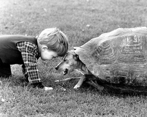 Dog in tortoise shell by John Drysdale