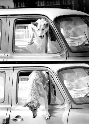 Dog escaping from a parked car by David Hornback