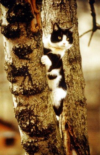 Black and white kitten climbing a tree by Bernd G. Seiler