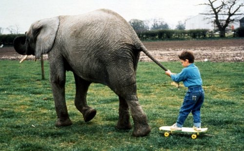 Elephant pulls child on skateboard by John Drysdale