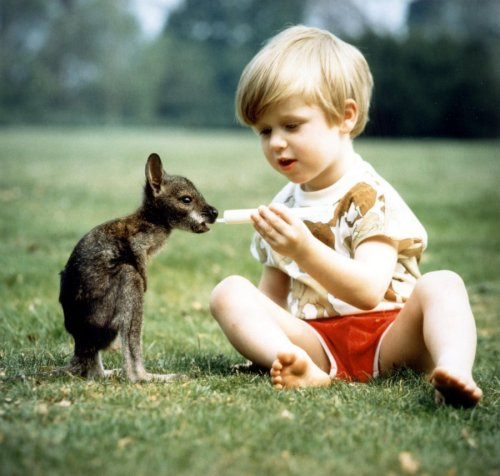 Boy bottle-feeding a baby kangaroo by John Drysdale