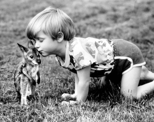 Child kissing kangaroo by John Drysdale