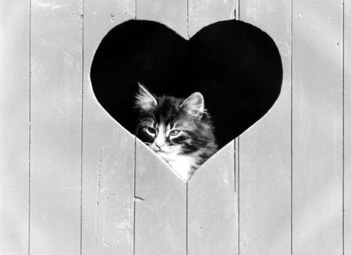 Kitten looking through a heart-shaped window by Bernd Schellhammer