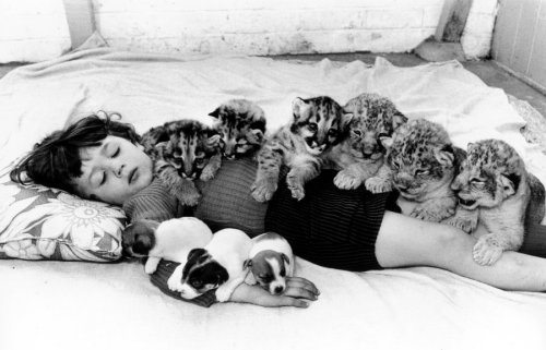 Sleeping girl with puppies and cubs by John Drysdale