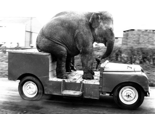 Elephant driving a car by John Drysdale