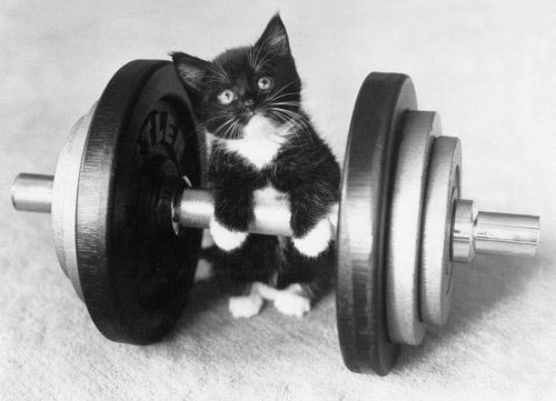 Little kitten tries weight-lifting by Keystone