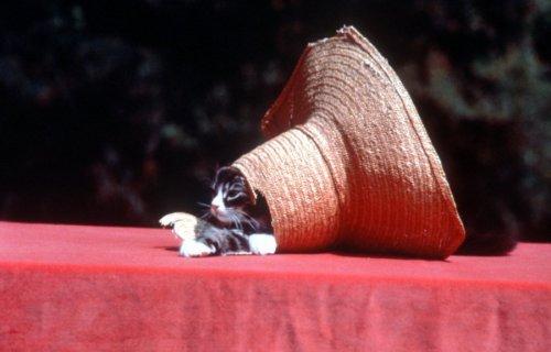 Cat in hat by Bernd Schellhammer