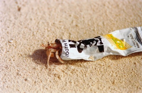 Hermit crab in toothpaste tube by Heinz Krimmer