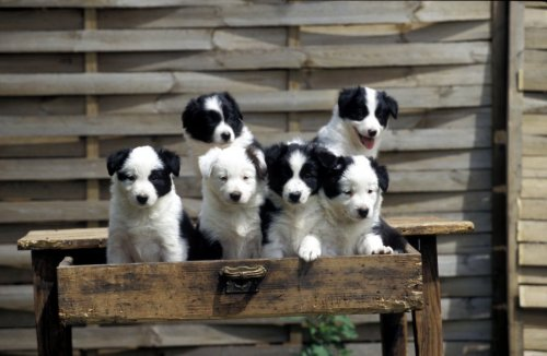 Puppies in a drawer II by Gerd Pfeiffer