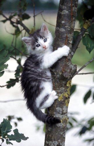 Kitten climbing a tree by Gerd Pfeiffer