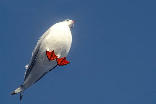 Seagull from below by Martin Langer