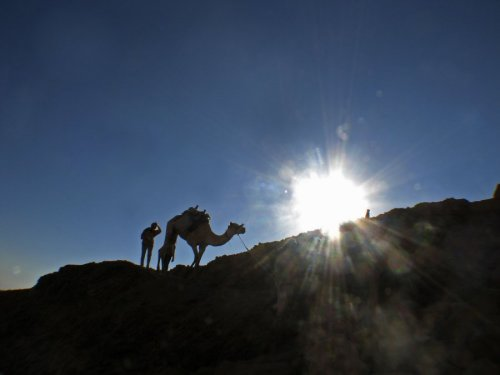 Camel on a mountain, Egypt by Heinz Krimmer