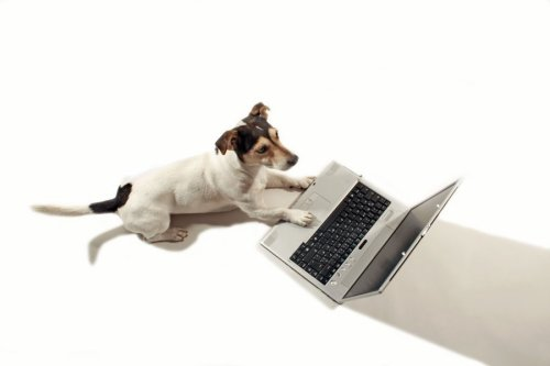 Jack Russell working on a laptop by Rosseforp