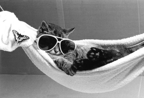 Cat wearing sunglasses in a hammock by Rüdiger Poborsky