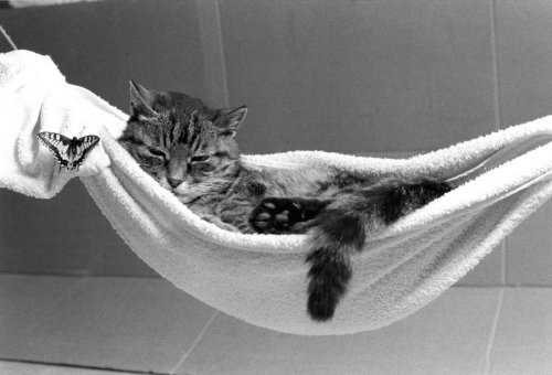 Cat in a hammock with a butterfly by Rüdiger Poborsky