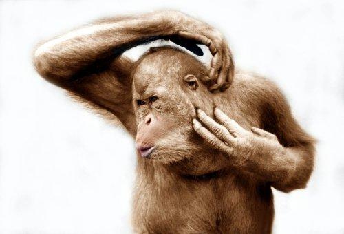 Orangutan scratching by Walter Sittig
