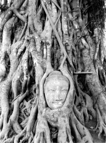 Buddha in roots, Ayutthaya, Thailand by Heinz Krimmer