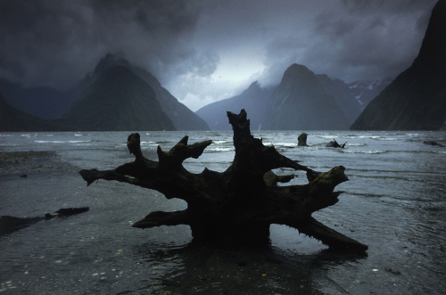 Roots in a mystic landscape, Milford Sound by Roland Marske