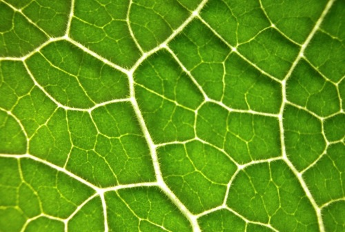 Green leaf close-up by Rosseforp